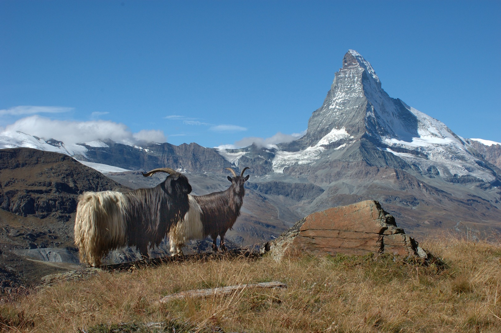 Zermatt animals